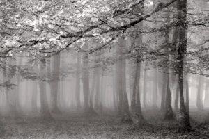 © Günter Unbescheid - Herbst