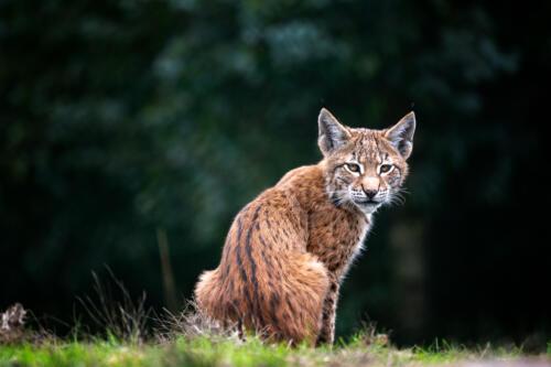 Elke Schierholz | Im Tierpark
