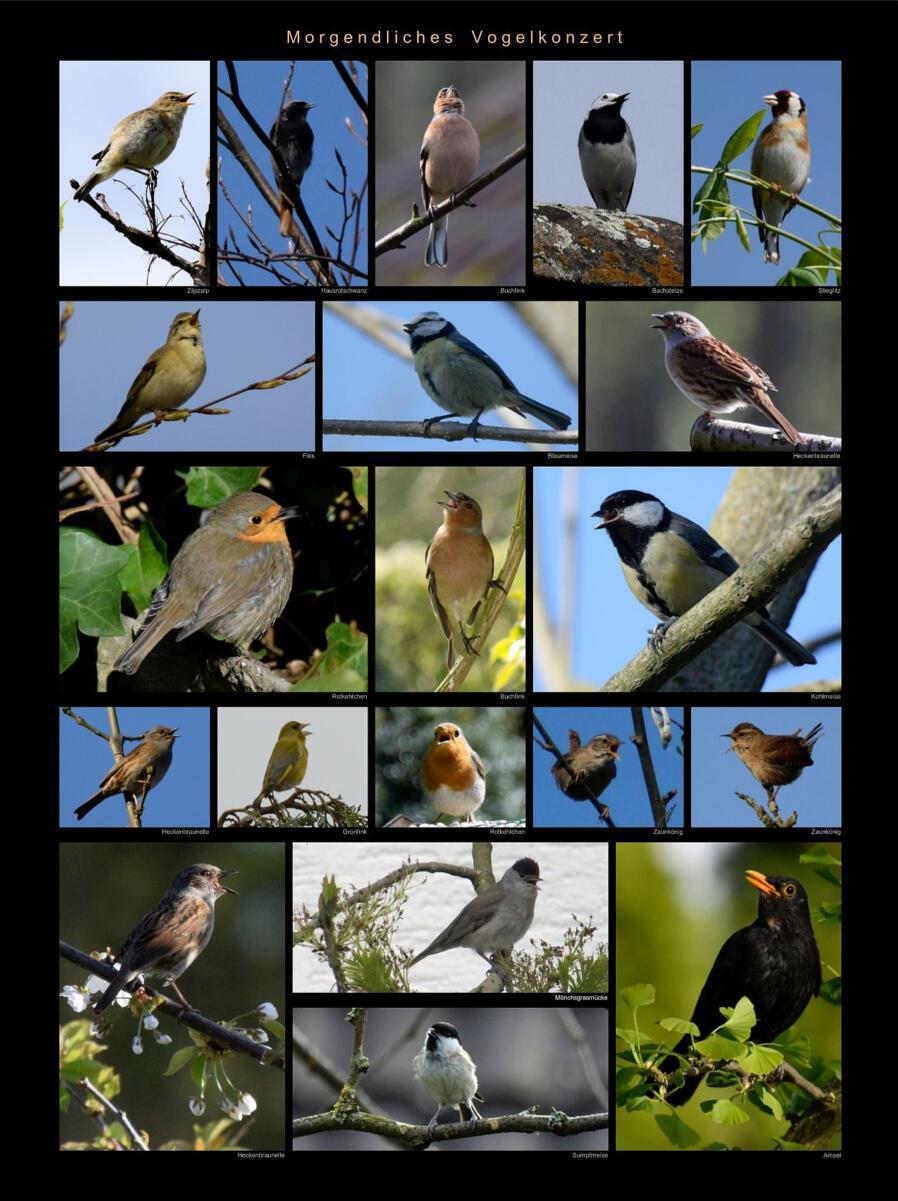 02 - Morgendliches Vogelkonzert