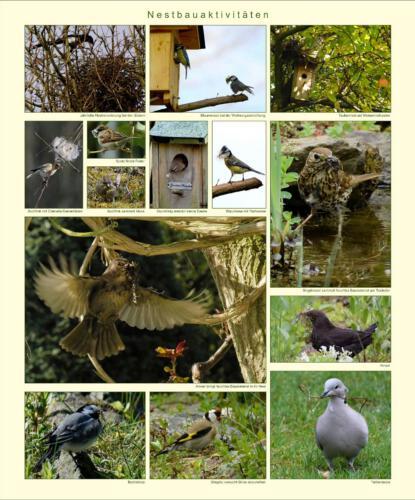 11 - Nestbauaktivitäten