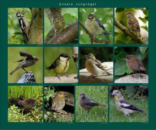 12 - Unsere Jungvögel