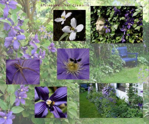 28 - Blütenbesucher Clematis